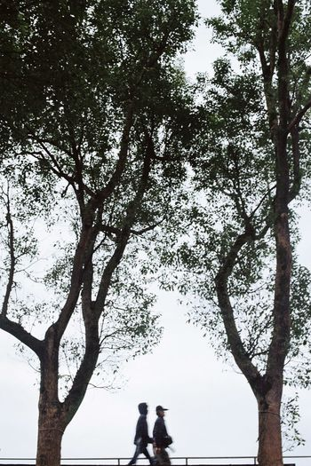 Rear view of people standing by tree against sky