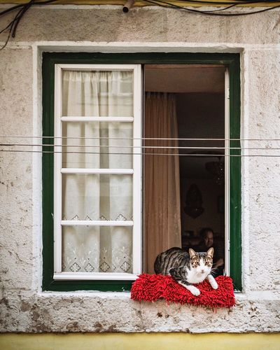 EyeEm Selects cat / window Domestic Cat Pets Window Domestic Animals Animal Themes Door Mammal House One Animal Building Exterior Built Structure Feline Day No People Architecture Outdoors Lisbon - Portugal Lissabon