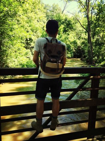 Park Nature Hiking Bridge