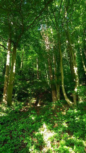 Wald Grün Wald