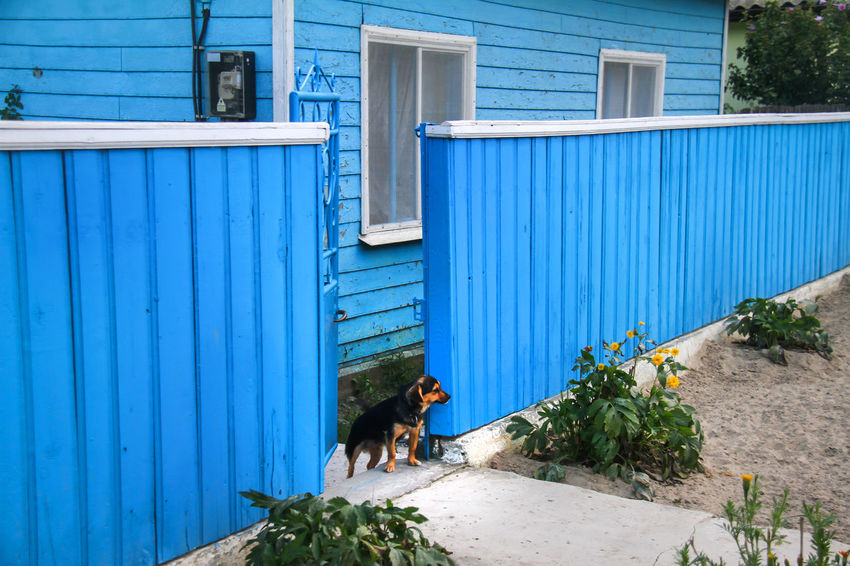 Delta Danube Sulina Animal Themes Architecture Blue Building Exterior Built Structure Corrugated Iron Day Dog Domestic Animals Full Length Mammal One Animal One Person Outdoors Pets Real People