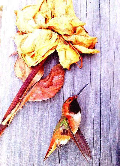 Humingbird Naturaleza Muerta California Sad But Beautiful Photographic Memory Life Is Short But Beautiful