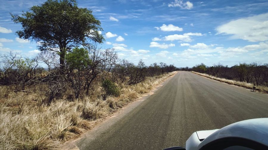 Game Drive at Kruger Wildlife National Park South Africa Travel Safari Adventure Game Drive Kruger Transportation Road Tree Plant Mode Of Transportation Cloud - Sky Sky Nature Car The Way Forward Motor Vehicle Land Vehicle Direction Land