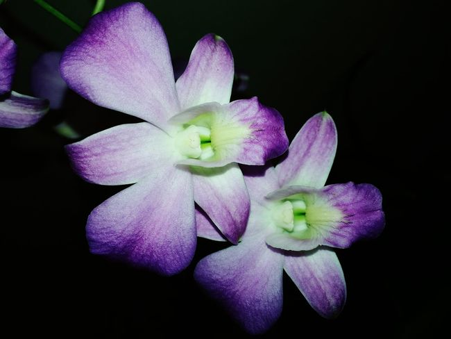 """Beauty that God's created What I Value Beautiful Nature Orchids Flowers Flower Porn Macro Photography Open Edit"
