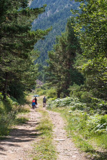 Hiking Nature Nature Photography Plants Pyrenees SPAIN Activity Day Direction Dirt Road Footpath Green Color Leisure Activity Nature Outdoors People Pine Tree Plant Real People Rear View Tree Walking