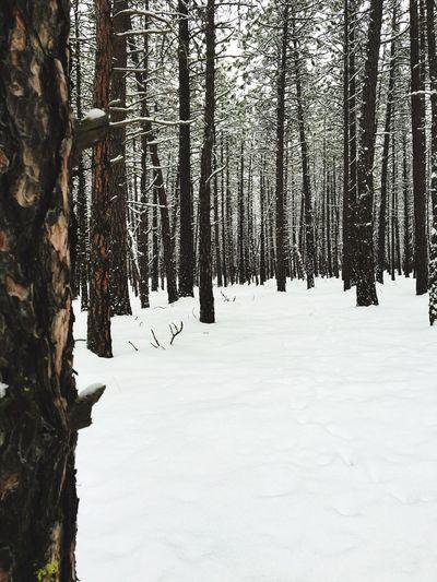 The Magic Mission Snow Nature