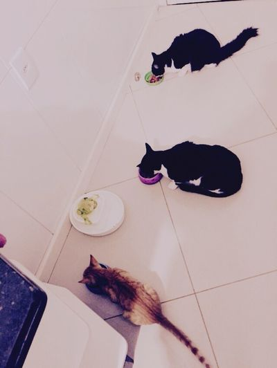 Cat Cats Feeding  Eating Dinnertime Pets Lovethis Socute 🐱🐱