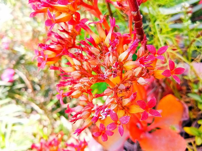 pink,red mix flowers it's very beautiful EyeEmNewHere EyeEmNewHere