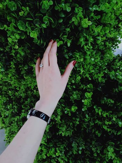 Close-up of woman hand against plants