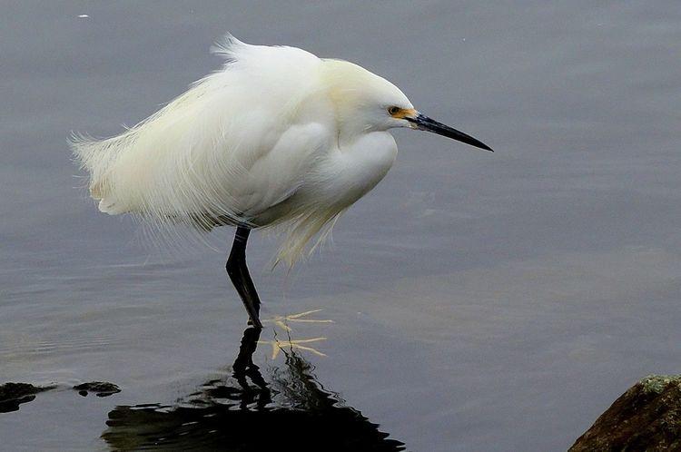 Blue Heron Bird Egret Made My DAY Sea Birds Water Front  Egret Fishing Egret In Lake Egret With Ocean Background Egret_in_flight Pelican