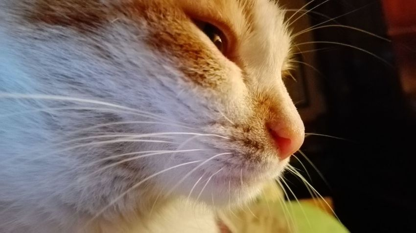 Domestic Cat One Animal Domestic Animals Close-up Animal Body Part Animal Themes Feline Pets Mammal No People Outdoors Day