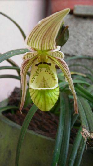 Orquídea Linda Orquídea❤ Naturaleza Orquídea Flor Plants
