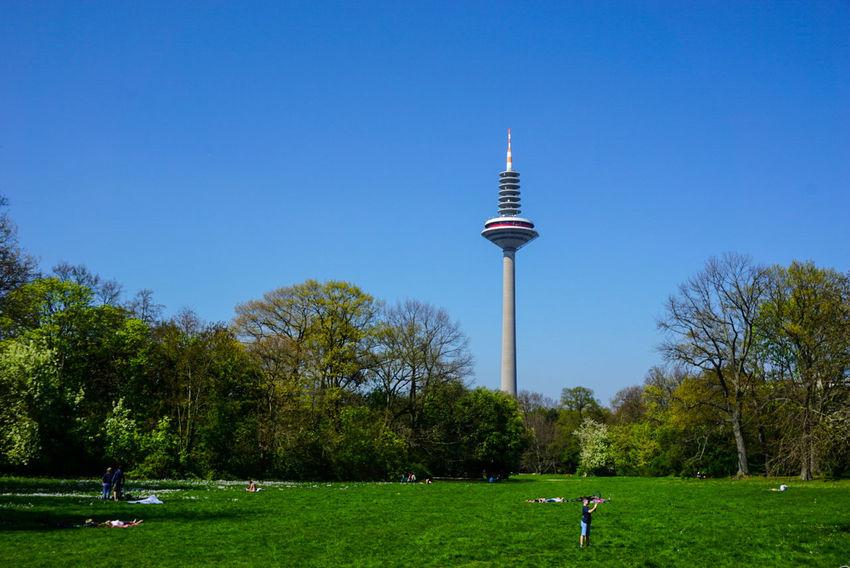 Park - Man Made Space Tree Green Color Outdoors Sky Day Park Frankfurt Frankfurt Am Main Grüneburgpark Blue Sky Summer