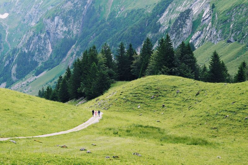 Wanderlust Hiking Hiking Trail Mountains Hill Green Grass Way Walking Outdoors Non Urban Scene Nature Beauty In Nature Summer Swiss Alps Trees Tranquility Tranquil Scene in Seealpsee Switzerland A Bird's Eye View