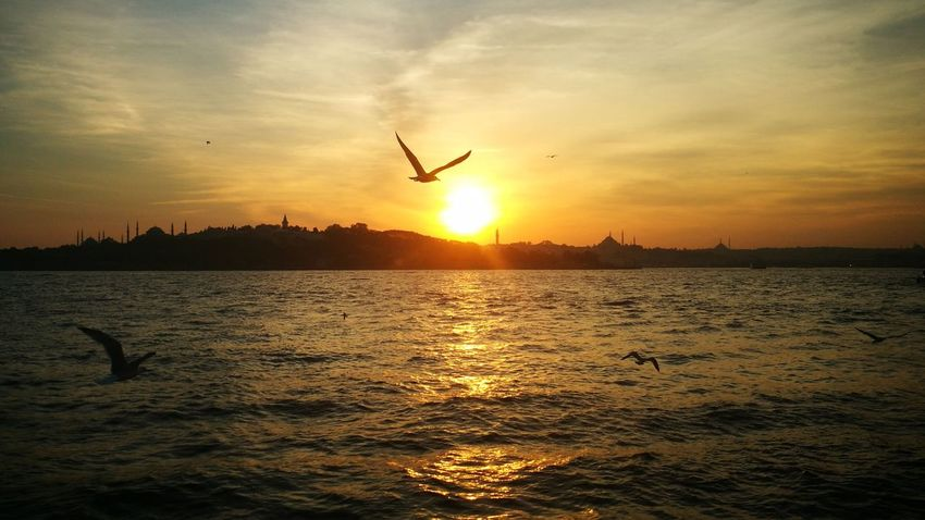 Sea Sunset Flying Bird Sky Sun Silhouette Nature Outdoors Scenics Tranquil Scene Cloud - Sky Beauty In Nature Travel Destinations Vacations Water Sunlight Animal Wildlife Sea No People Animal Themes istanbul turkey City Stock Market And Exchange