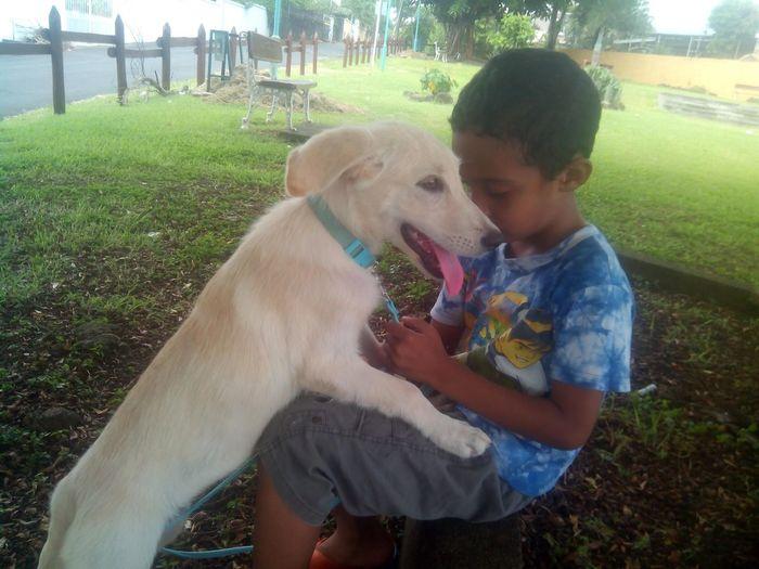 Beau Bassin Mauritius Puppy Love
