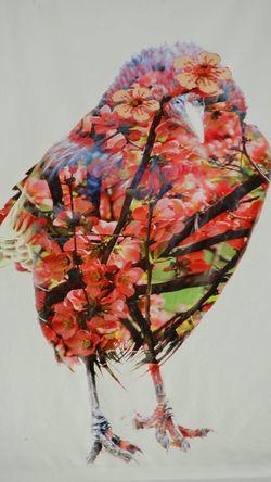 ... Bird Photography Birds Of EyeEm  The Week On EyeEm Beauty In Nature Bird Birds_collection Flower Nature White Background