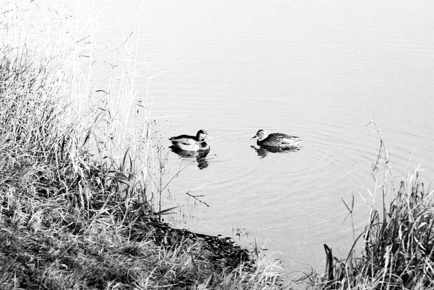 Location: Volksbad Canon EOS 50E | APX 100 -> 200 | D-76 AgfaPhoto APX 100 (new) Black And White Blackandwhite Canon EOS 50E EyeEm Best Shots - Black + White Kodak D-76 Monochrome Nature Water Wildlife