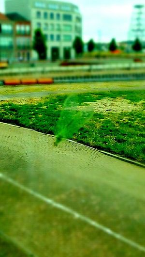 First Eyeem Photo Fly Green Fly Little Bug Fly On My Window Fly On The Window Colour Of Life Color Palette