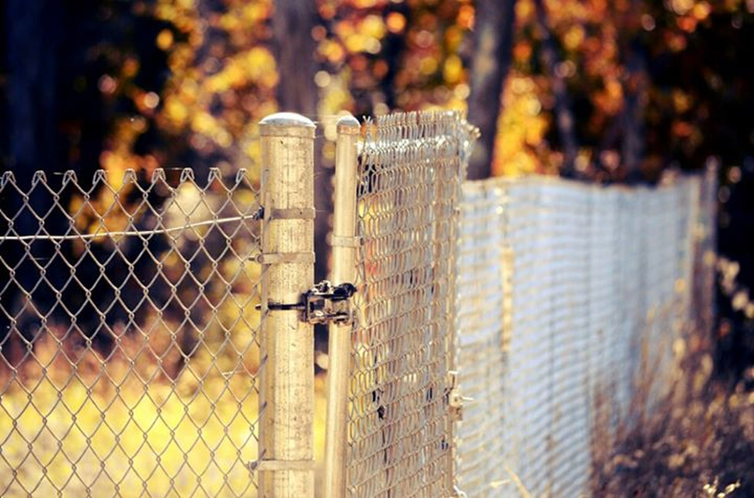 fence, safety, protection, chainlink fence, metal, security, focus on foreground, animal themes, metallic, outdoors, gate, day, selective focus, metal grate, no people, close-up, barbed wire, railing, chain, mammal