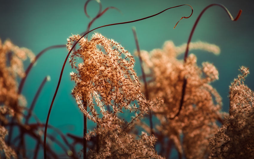 Plant Focus On Foreground Beauty In Nature Growth Close-up Nature No People Selective Focus Fragility Vulnerability  Day Dry Flowering Plant Tranquility Freshness Outdoors Plant Stem Brown Dead Plant Wilted Plant Dried Gräser Nature_collection Nature Photography EyeEm Nature Lover