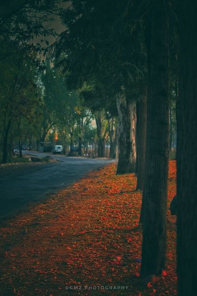 Tree Autumn Leaf Growth Nature Outdoors Tree Trunk Agriculture No People Beauty In Nature Scenics Rural Scene Day Plant Landscape Grass Sky Freshness