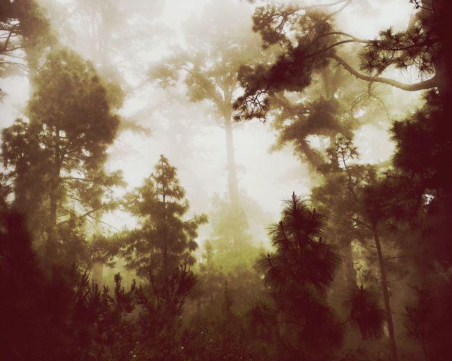 Forest Photography Beautiful Nature TreePorn Time For Reflection Eyemtenerife Joy EyeEm Gallery