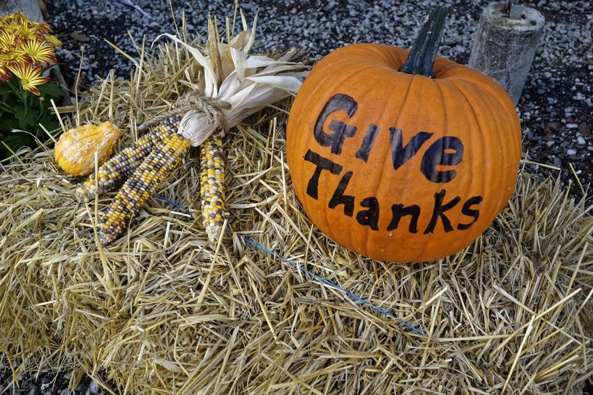 Thanksgiving Corn Give Thanks  Harvest Hay Pumpkin Vegetable