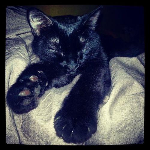 Buffina e la coccola infinita Solococcole Gatti Cats Kittens blackcat