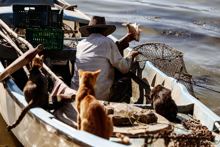 Man in boat on lake by cats