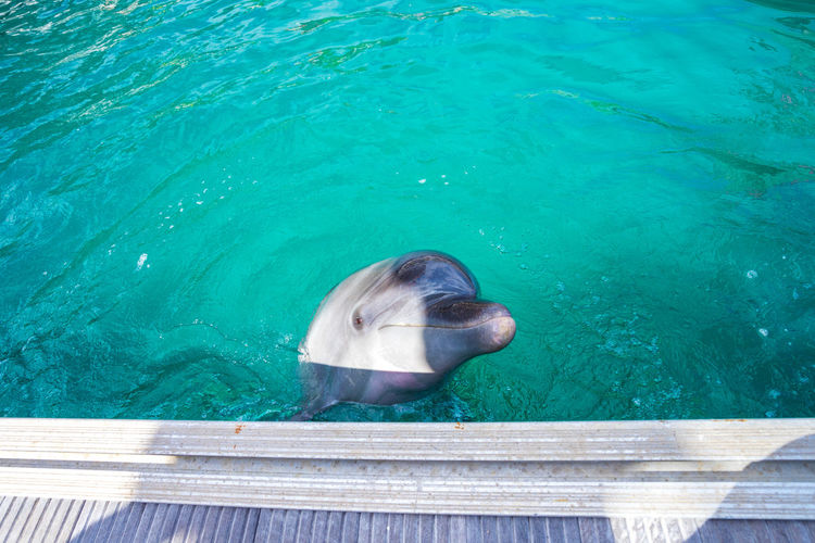 Animal ASIA Blue Sky Dolphin Enjoying Life EyeEm Friendly Japan Lagoon Okinawa Onna-village Renaissance Resort Okinawa Touch Vacation