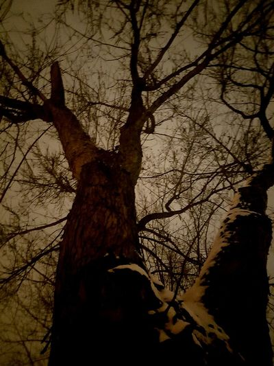 Night Sky Tree Branch Bare Tree Tree Trunk Silhouette Forest