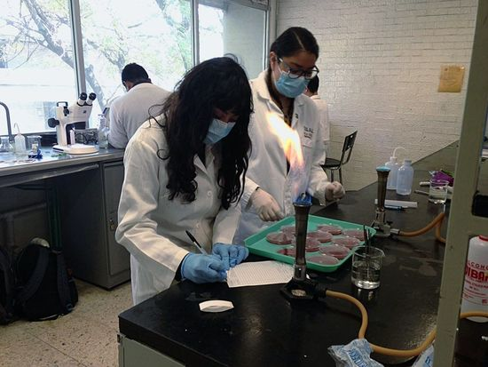 Laboratory Work Laboratory Experiments Laboratory Experience Of Life Experiencing Life Biology Class Biologylab Biology Faculty Biology Project Swagg Bacteria Lab Medio De Cultivo Two People People Working Occupation Artist Expertise Standing Women Day