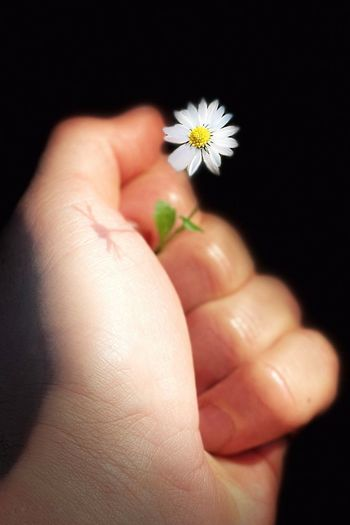 Close-up of hand holding small flower