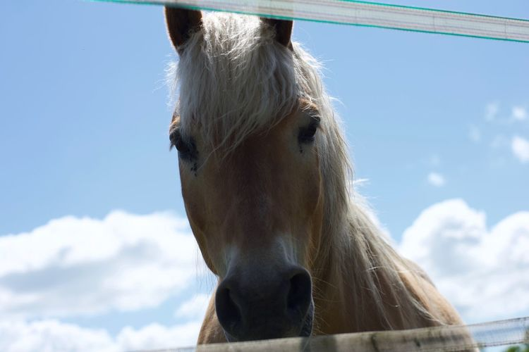 Close-up of horse in ranch against sky