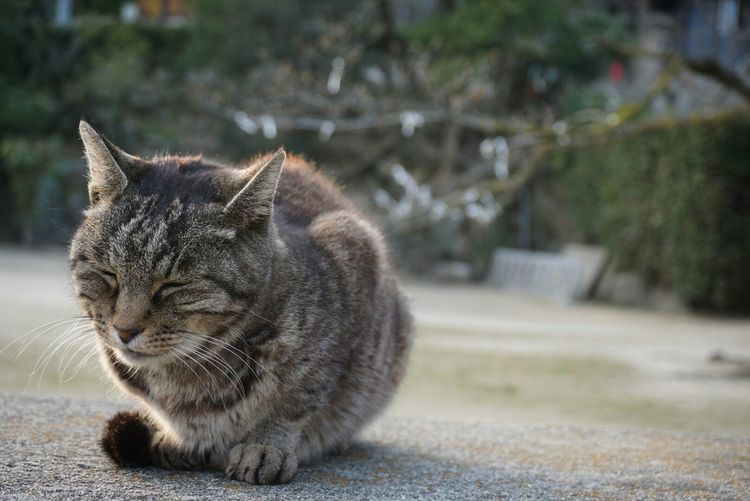 Close-up of cat on footpath