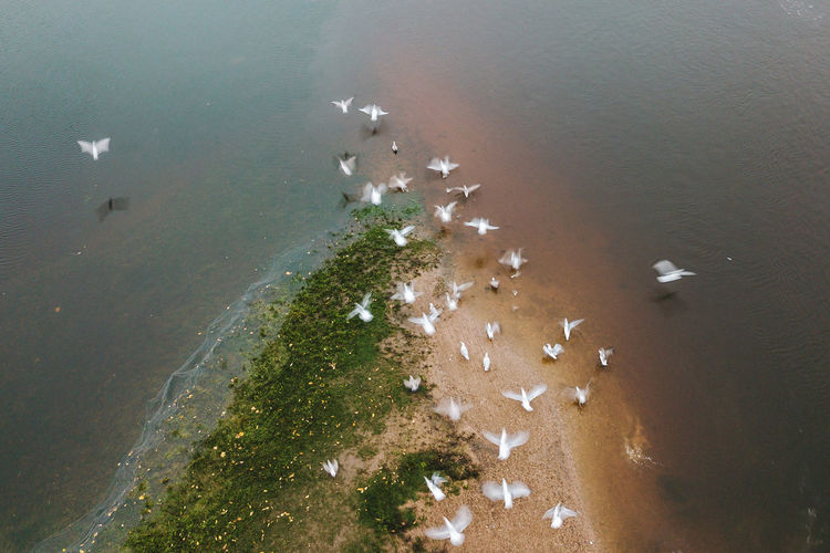 Birds in motion Drone  Animal Themes Beach Beauty In Nature Birds Day High Angle View Large Group Of Animals Mavic Mavic Pro Nature No People Outdoors River Scenics Sea Water Perspectives On Nature