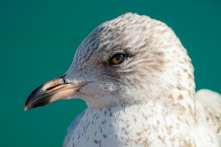 Seagull gets a head shot on a sunny day at the beach in winter
