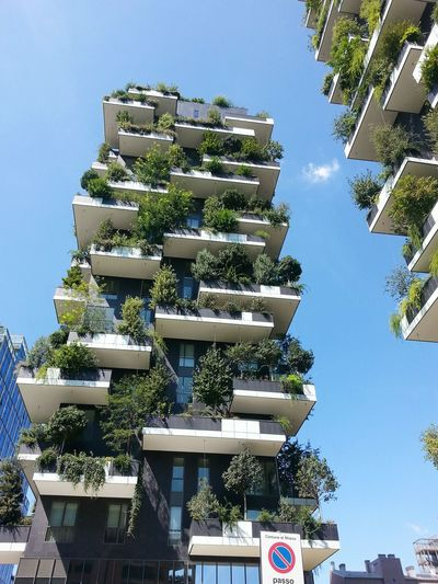 Adapted To The City Tree Architecture City Sky No People Outdoors Building Exterior Day Cityscape Milano Design Nature Milanoportanuova Italy Milan Business Finance And Industry Architecture Apartment