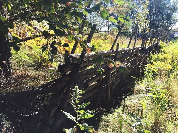 Fence Line Fence Sunny Day Sunny Nature Peter Wernqvist Wernqvist