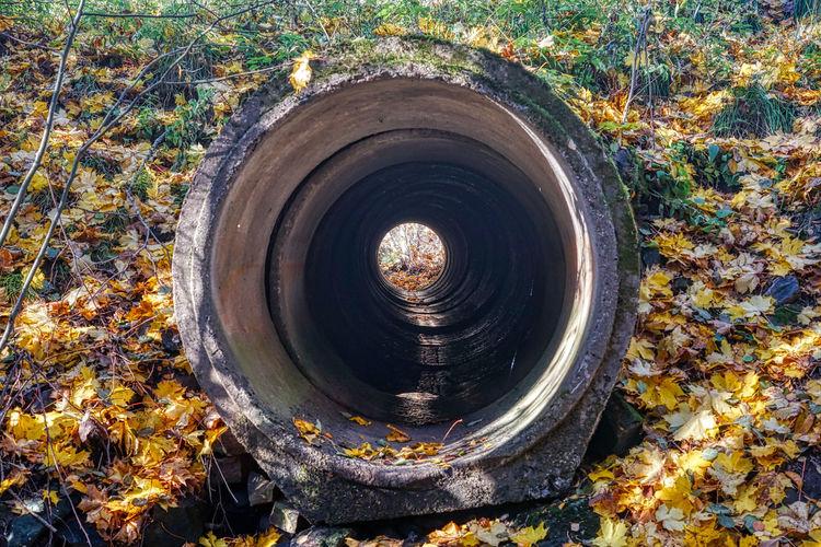In the autumn forest. https://www.instagram.com/johnmaren/ https://www.photobymaren.com https://plus.google.com/u/0/+JohanMarengard https://www.flickr.com/photos/115763201@N02/ Autumn Geometric Shape Nature Shape Plant Leaf Pipe - Tube Plumbing Drainpipe