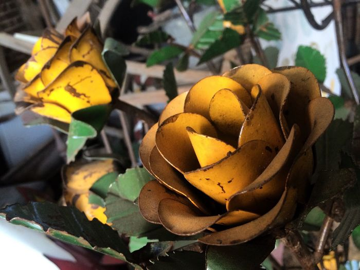 Roses Yellow Yellow Flower Yellow Rose Metal Art Texas Rust Rusty Green Leaf Petal Rural Two Is Better Than One Art Is Everywhere