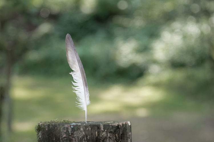 Close-up of feather against wood