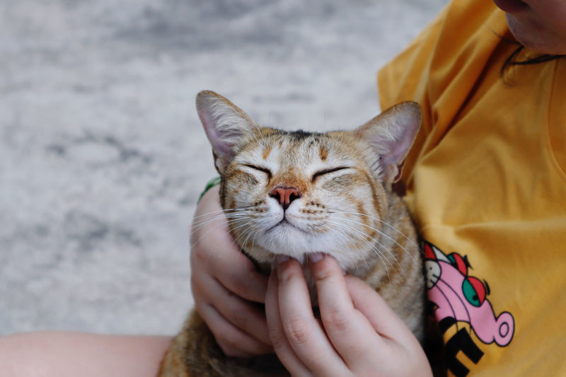 Midsection of woman holding cat