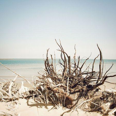 Photooftheday Bibione Sea Seaview Summer