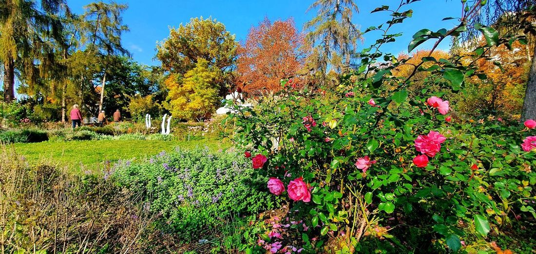 Flowering plants and trees in park during autumn