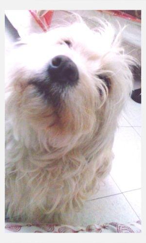 Dog Love Beauty She Cute First Eyeem Photo