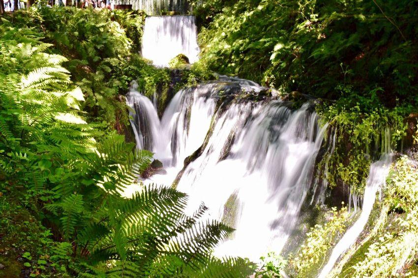 Shiraito Falls【白糸の滝・軽井沢】 Karuizawa,Japan River Nature Japanese Superb View Japan Shiraito Falls Plant Waterfall Tree Motion Beauty In Nature Water Long Exposure Nature Flowing Water Scenics - Nature