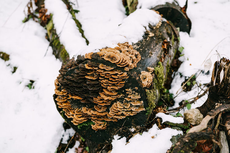 High angle view of mushroom growing on snow covered field