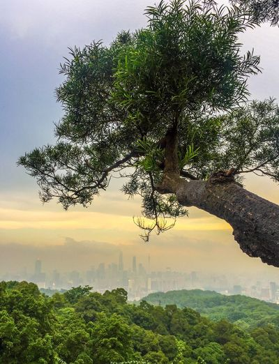 Branches of the City Check This Out Taking Photos Enjoying Life Hanging Out Hello World Cheese! Relaxing Guangzhou,China Nature Cityview Cityscape Mountain View Baiyun Mountain Guangzhou Site Seeing Urbanexploration Horizon Sunset Bonsai